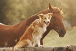 Dog%20and%20Horse_edited.jpg