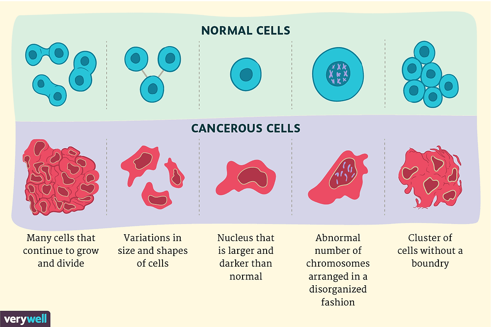 normal cells and cancerous cells