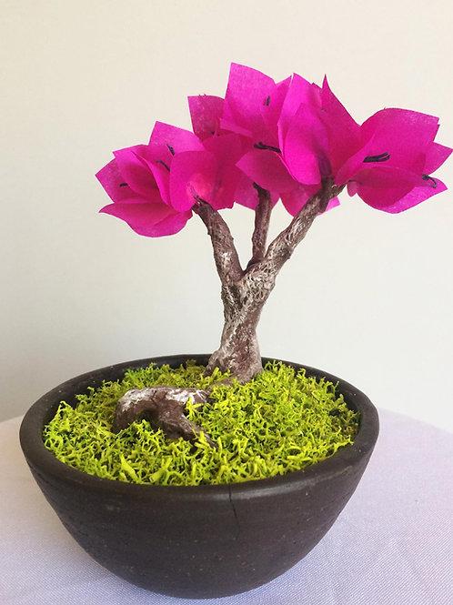 Bonsai de papel Bouganvillea fucsia