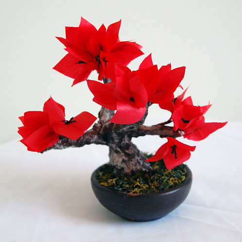 Bonsai Bouganvillea Roja