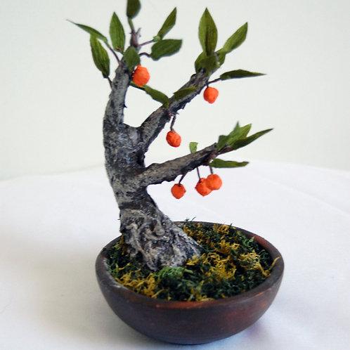 Bonsai naranjo2