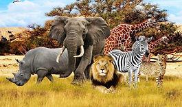 african-animal-wallpaper_edited_edited.j