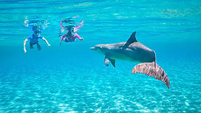 see-do-unique-tours-adventures-dolphin-c