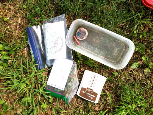 Letterboxing: The Perfect Hobby