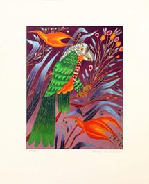 Parrot-web.jpg