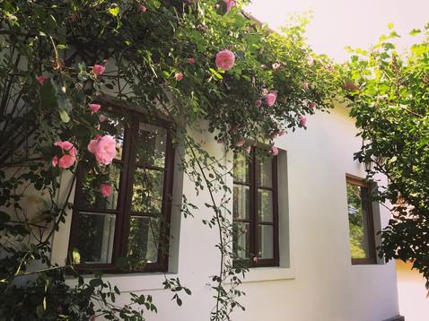 Menedék rózsái