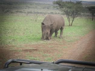 LCM SouthAfrica-15.jpg