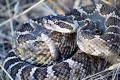 snake-2799910_960_720.jpg