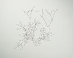 pato+plantas