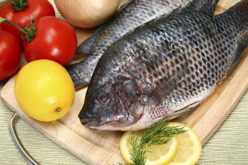 Tilapia-Fish-Healthy