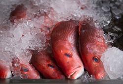 151227-cst-fish-market_1415_2627