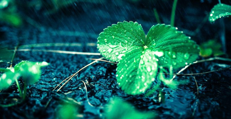 8:30 am UPDATE: Monday, June 21st 2021-rain or shine!