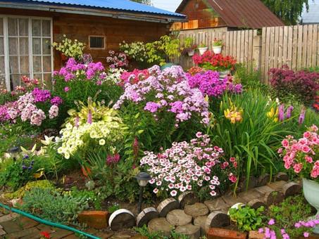 «Цветик-многоцветик»