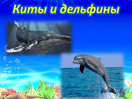 23 июля – всемирный день защиты китов и дельфинов
