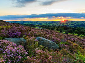 Heather-in-bloom-Landscape-photography-N