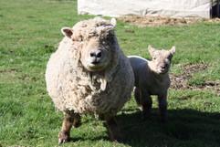 Lamby&Mom.jpg