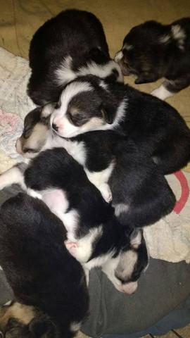 Puppoes.jpg