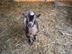 Lamby3.jpg
