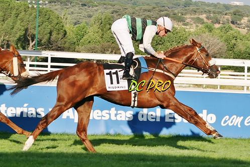Wild King ganando el Derby. La Zarzuela 04.11.17