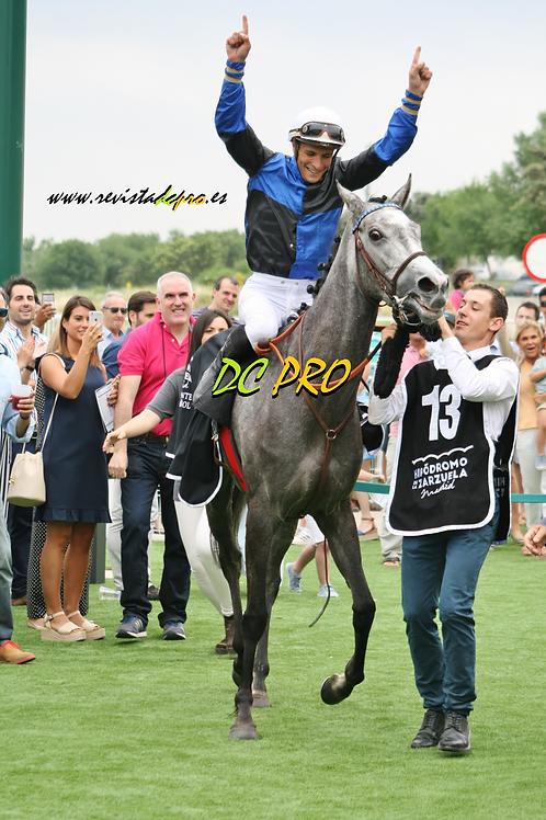 Winfola tras ganar el GP Beamonte 28.05.17 (La Zarzuela)