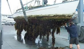 New Zealand Bio Security and marine growth