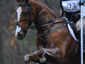 Wasting Light 2nd at Ravenna CCI***!!