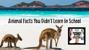 Funny Animal Facts You Didn't Learn In School - WTFF Podcast Episode 07