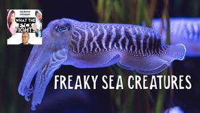 Freaky Sea Creatures (AKA SQUIDS, SQUIDS, SQUIDS) - WTFF Podcast Episode 16