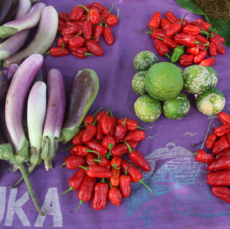 """""""We have a number of vegetables growing around our land like pumpkins, avocadoes, egg plants and string beans that we sell when they are ready either here on the road for passing car or if there is plenty, my husband or I would take them to town to sell."""" [Interview – Samoan female]"""