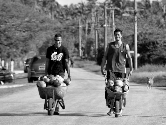 """""""We've had so much more time together. It is good to be out in the open and getting dirty… the quiet in the plantation allows us to relax while working. Less stress and this feels natural."""" [Interview – Samoan male who lost job as waiter]"""