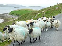 Connemara, Renvyle