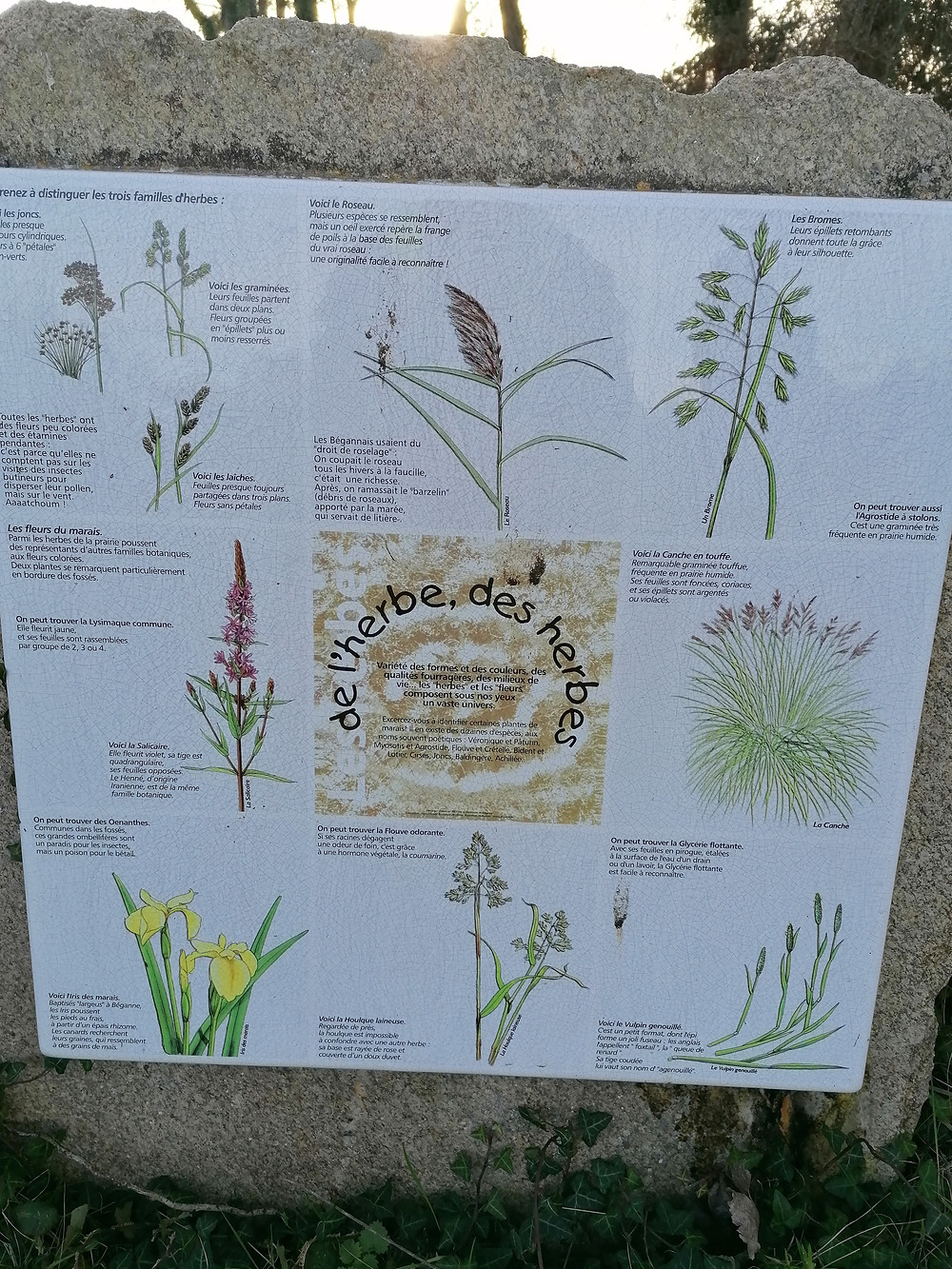 les herbes Le Rohello Beganne