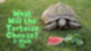 WHAT_WILL_THE_TORTOISE_CHOOSE_5_PACK.PNG