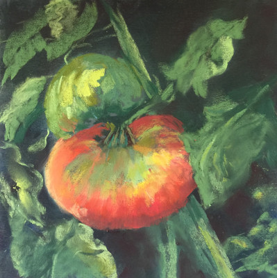 On the Vine Series: Tomatoes