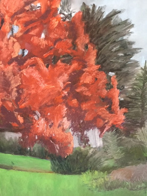 Neighbored Red Maple