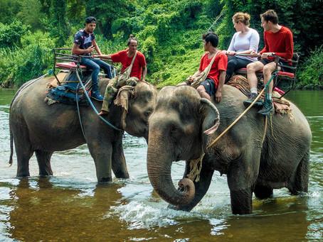 Pattaya Elephant Village_[파타야 코끼리 빌리지]