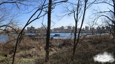 Coney Island Creek