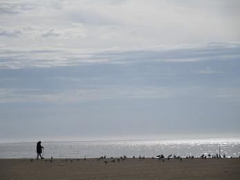 Beach loner in the winter