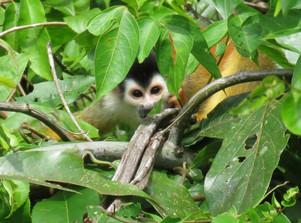 sqirrel_monkey.jpg