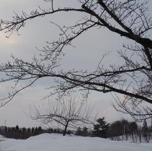 真冬の雪景色