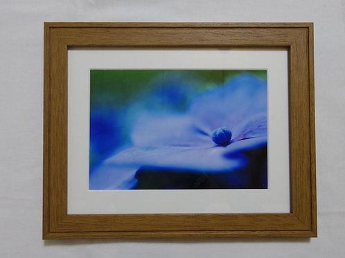 紫陽花の写真フレーム