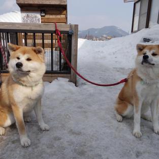 秋田犬とふれあえる場所