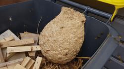 nid de guepes dans une poubelle EURE