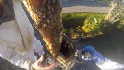 abeilles dans une cheminée