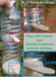 Piéges selectif frelons asiatiques / halteauxguêpes27