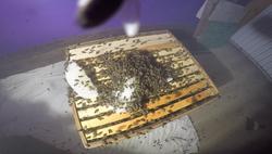 halteauxguepes27 abeilles