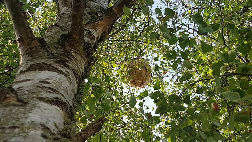 la chapelle du bois des faulx gros nid d