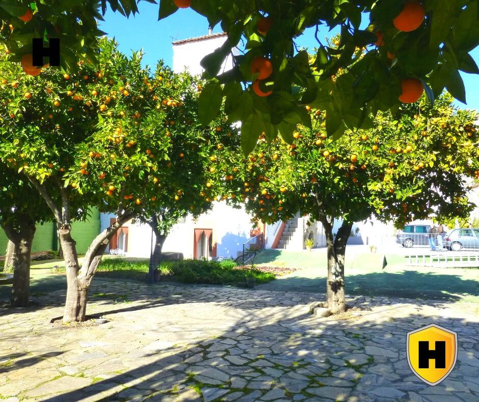 El Jardín del Hostal San Miguel