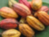 cocoa_pods.jpg