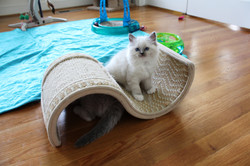 Arthur - Blue Mitted